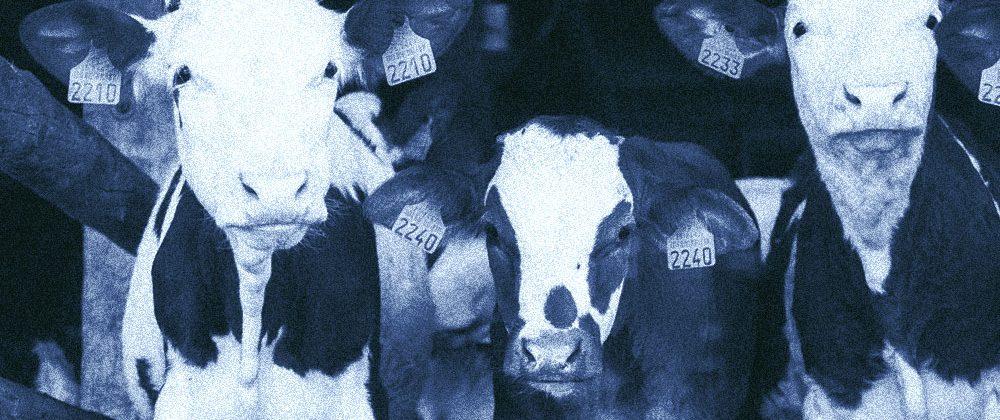 nutrizione animale